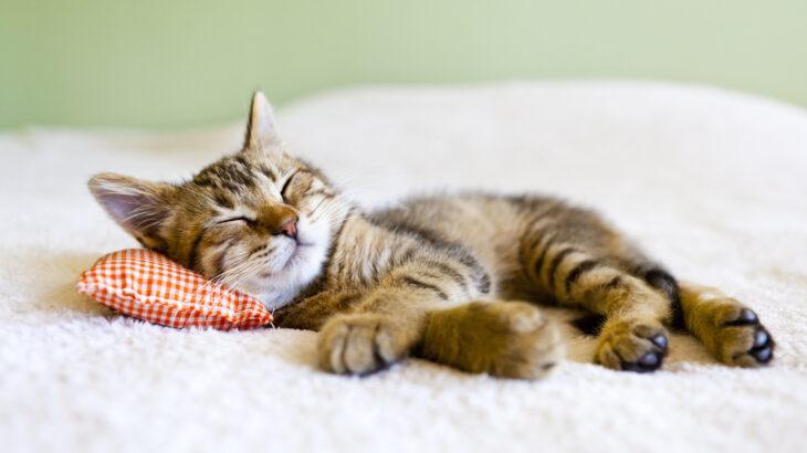 2月22日の「猫の日」を記念したキャンペーンを厳選して紹介!